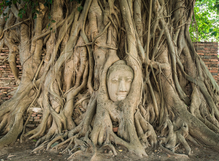 Stone head of Buddha nestled in the embrace of bodhi trees roots at Wat Mahathat, Ayutthaya, Thailand photo