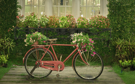 wheel house: old classic style vintage red bicycle with white window and garden background