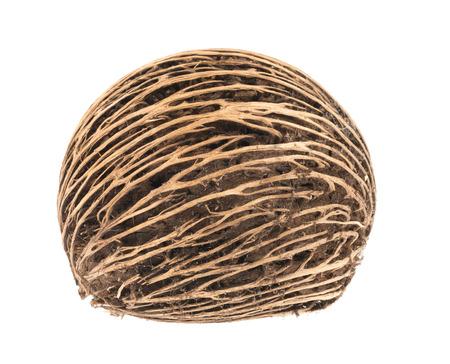 pong: Cerbera oddloams seed, Pong pong seed or Othalanga