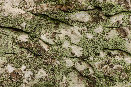 tile background: close up background and texture of old  stone surface  in nature