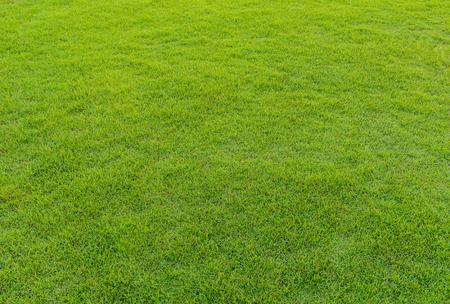 balones deportivos: cerca de fondo de la hermosa modelo de la hierba verde del campo de golf en la puesta del sol