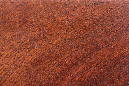 fabaceae: Macro Ormosia wood texture, Afzelia xylocarpa (Kurz) Craib, LEGUMINOSAE-CAESALPINIOIDEAE (FABACEAE)
