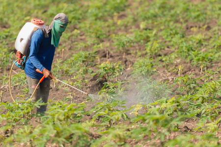 Tailandia Hombre agricultor para rociar herbicidas o fertilizantes químicos en los campos de mandioca verde en crecimiento.
