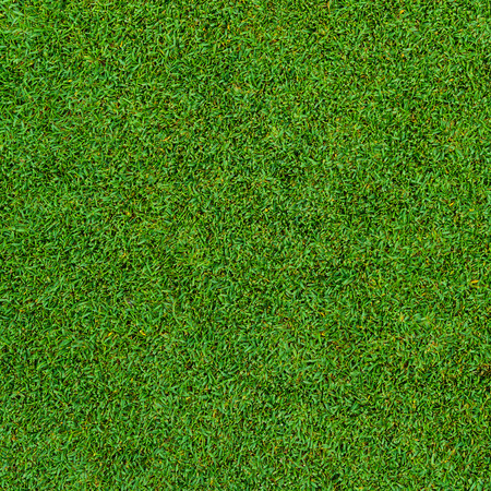 Background and texture of Beautiful green grass pattern from golf course Banco de Imagens