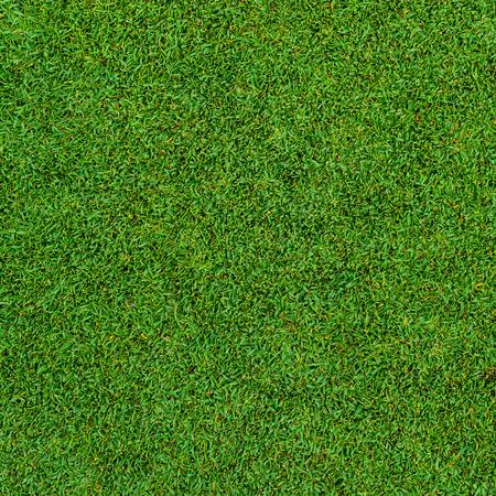 Fond et texture du beau motif d'herbe verte du terrain de golf Banque d'images