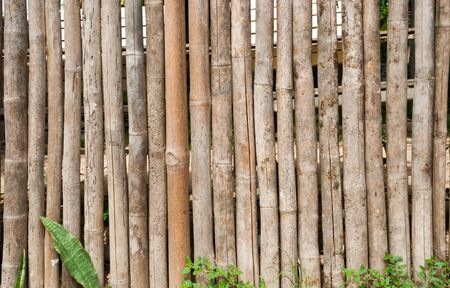background and texture bamboo of fence with green grass 免版税图像