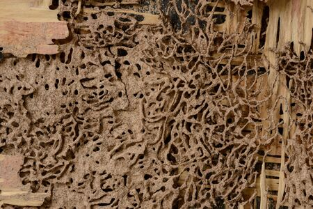 background and texture of nest termite at wooden wall