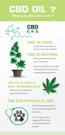 hemp CBD oil what is it and cannabis natural,vector infographic icon on white background and poster.