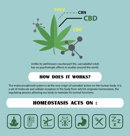 the endocannabinoid system(CBD,THC) is homeostasis acts of cannabis on human body