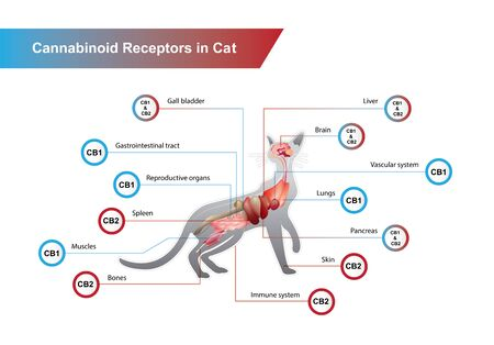 Cannabinoid receptors in Cat and CB1 and CB2 work.