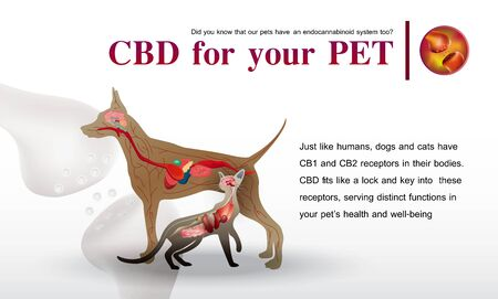 CBD for your PET,Did you know that our pets have an endocannabinoid system too?