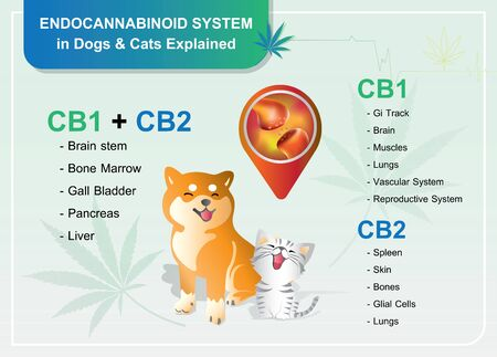 Endocannabinoid receptors in Canines and CB1 and CB2 work.