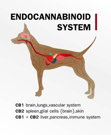 the endocannabinoid system of dog cb1 and cb2