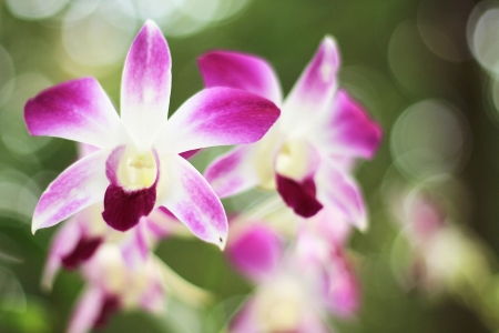Beautiful purple orchid  photo