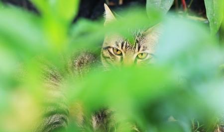 sneak: Cats sneak in Forest Lawn  Stock Photo