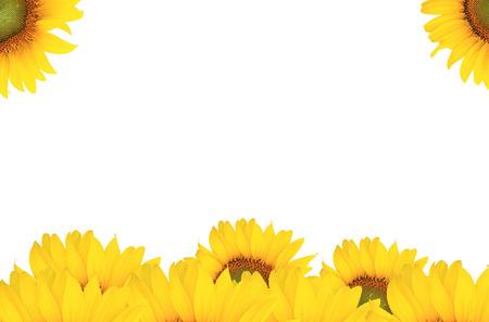 Surface sunflower.