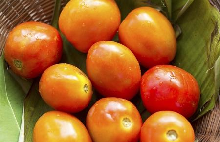 Tomato Croseup.