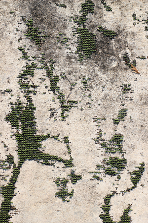 Cement vertical background Stock Photo