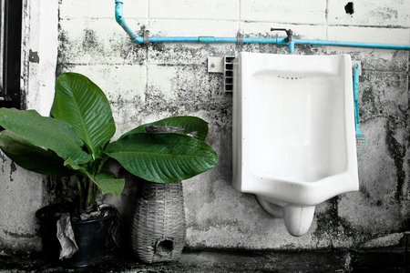 Toilet Background with green tree
