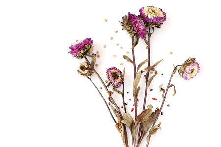 Dried Flowers white background Stock Photo
