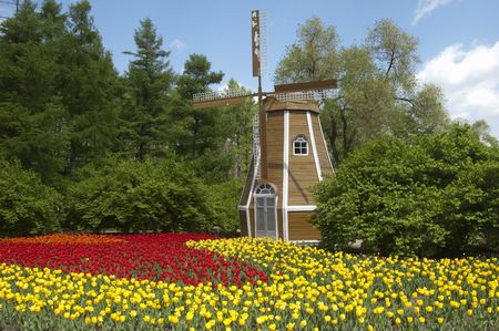 the windmill and the tulip photo