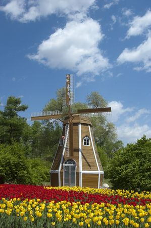 the windmill and the tulip Stock Photo - 6180252