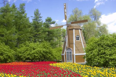 the windmill and the tulip Stock Photo - 6645671