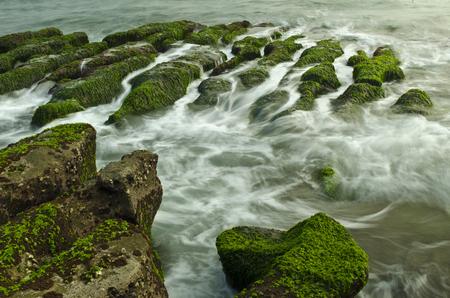 algal: Stone Trench of Taiwan Laomei Coast