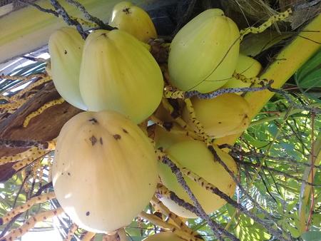 coco fruit fresh