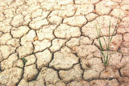 A grass on the very dry dirt ground
