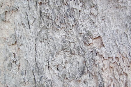 skin of old tree