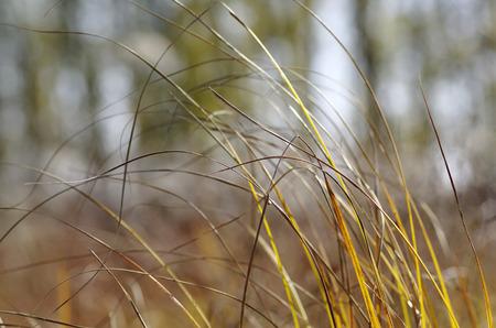 bacillus: Grass Stock Photo