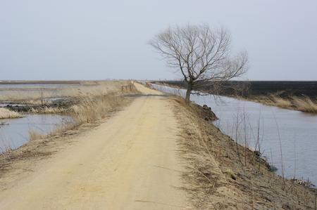 wetlands: Wetlands