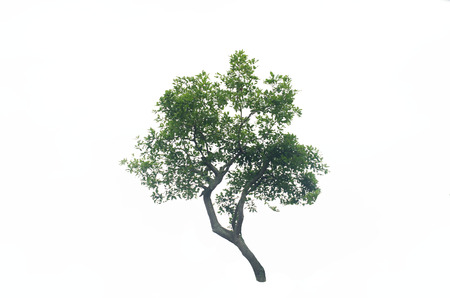 白の背景に木のブッシュ。