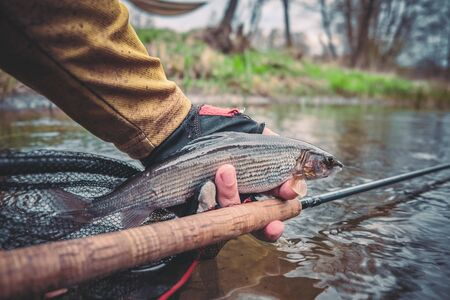 Beautiful grayling caught while fly fishing.