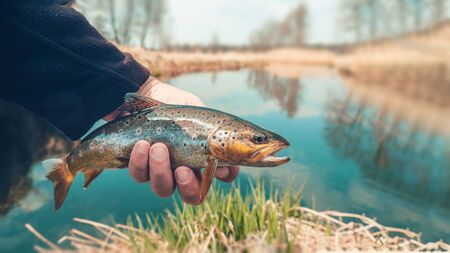 Beautiful trout in angler's hand. Fishing.