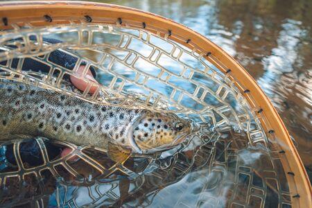 Beautiful trout in angler's hand. Fishing. Фото со стока