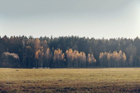 A herd of goats goes on a background autumn forest.