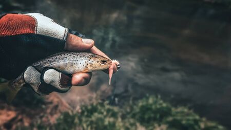 Beautiful little trout in angler's hand.