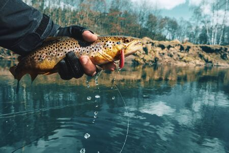 brown trout in the hand of a fisherman