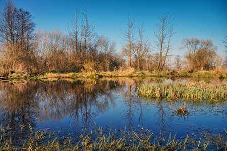Marsh grass and trees on a blue water background. Stok Fotoğraf