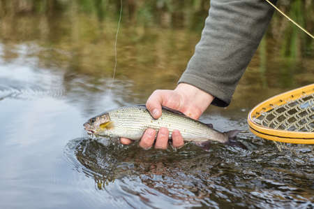 Fisherman caught a fish fly.