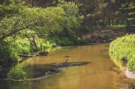 Forest river. Stok Fotoğraf
