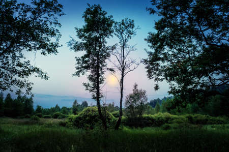 The moon lights up the forest in the evening. Stok Fotoğraf