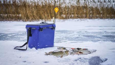 Winter fishing. Perch and pike caught from ice.