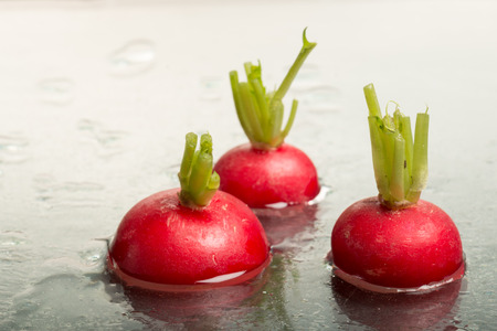 studioshot: Tops of three red radishes on display, studio-shot