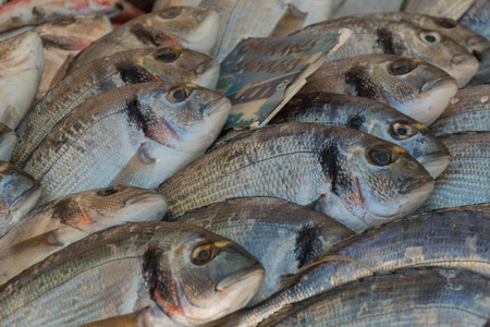 abramis: Freshly caught bream fish on display for sale at farmers market Stock Photo