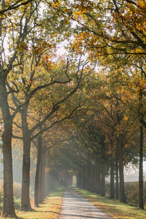 both sides: Road with trees at both sides, autumn afternoon