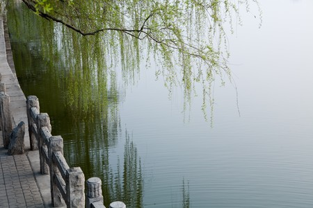 Quiet lake, willow branches touch the lake 스톡 콘텐츠