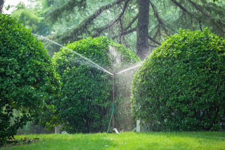 sprinkling: sprinklers are sprinkling plants in the woods Stock Photo